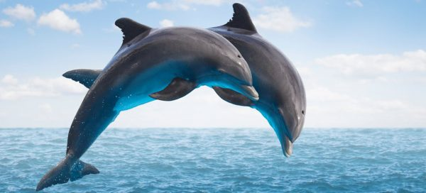 contoh report text animal - dolphin