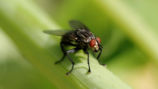 contoh report text animal - fly